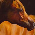 Arabian Horse Oil Painting by Mary Jo Zorad