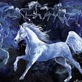 Arabian Night by Sherry Shipley
