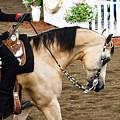 Arabian Show Horse 5 by Ben Graham