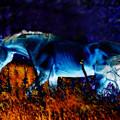 Arabian Stallion by ELA-EquusArt