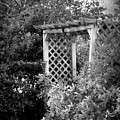 Arbor - Bw by Beth Vincent