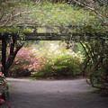 Arbor Walk by Kim Carpentier