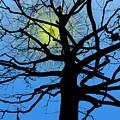 Arboreal Sun by Tim Allen