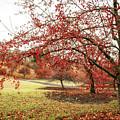 Arboretum by Marcia Darby