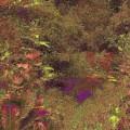 Arboretum Pond by Tim Allen