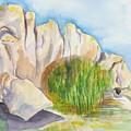 Arboretum Rocks by Kathy Mitchell