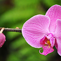 Arboretum Tropical House Orchid by Kyle Hanson