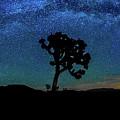 Arc De Joshua Tree II by Peter Tellone
