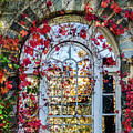 Arch And Red Vines by Chris Augliera