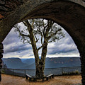 Arch Tree by Douglas Barnard
