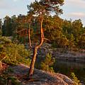Archipelago Sunset by Jouko Lehto