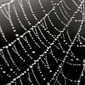 Architecture Of A Spiderweb Closeup by Christina VanGinkel