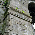 Architecural Detail At Irish Jerpoint Abbey County Kilkenny Ireland by Shawn O'Brien