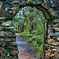 Archway To The Forest by Douglas Barnard