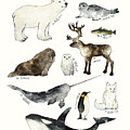 Arctic and Antarctic Animals by Amy Hamilton