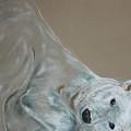 Arctic Frolic by Cori Solomon