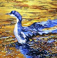 Arctic Loon On Golden Pond by Beverly Berwick
