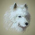 Arctic Serenity by Cori Solomon