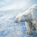 Arctic Sovereign by Cara Bevan