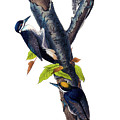 Arctic Three-toed Woodpecker Audubon Birds Of America 1st Edition 1840 Octavo Plate 268 by Orchard Arts