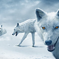 Arctic Wolves by Mal Bray
