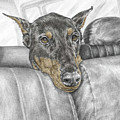 Are We There Yet - Doberman Pinscher Dog Print Color Tinted by Kelli Swan