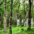 Argentina Trees by Ariane Moshayedi