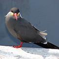 Arica Chile Sea Bird by Brett Winn