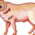 Aries The Ram by Jane Tattersfield