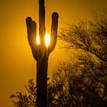 Arizona Cactus #1 by Daniel  Knighton