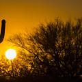 Arizona Cactus #2 by Daniel  Knighton