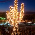 Arizona Christmas Tree by Jacek Joniec