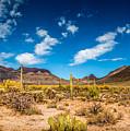 Arizona Desert #2 by Jon Manjeot