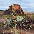 Arizona Desert Flowers-dwarf Indian Mallow by Jan Dappen