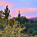 Arizona Desert by L L Stewart