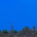 Arizona Desert Landscape  by James BO  Insogna
