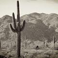 Arizona Desert by Methune Hively