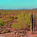 Arizona Desert Nice Place For A Walk by Tom Janca