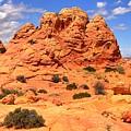 Arizona Elegance by Adam Jewell