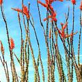 Arizona Nature by John Rizzuto