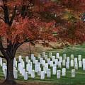 Arlington Cemetery by Erika Fawcett