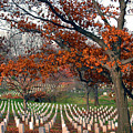 Arlington Cemetery In Fall by Carolyn Marshall