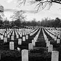 Arlington National Cemetery by Todd Fox