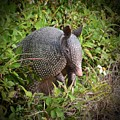 Armadillo And Flower by AnnaJo Vahle
