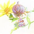 Arnica Garlic Thyme And Comfrey by Cameron Hampton PSA