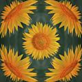 Around The Sunflower by Nikolyn McDonald
