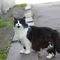 Arrogant Cat by Anton Starikov