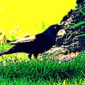 Art Deco Grackle by Kathy Barney
