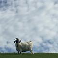 Art Goat by Margie Hurwich