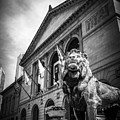 Art Institute Of Chicago Lion Statue In Black And White by Paul Velgos